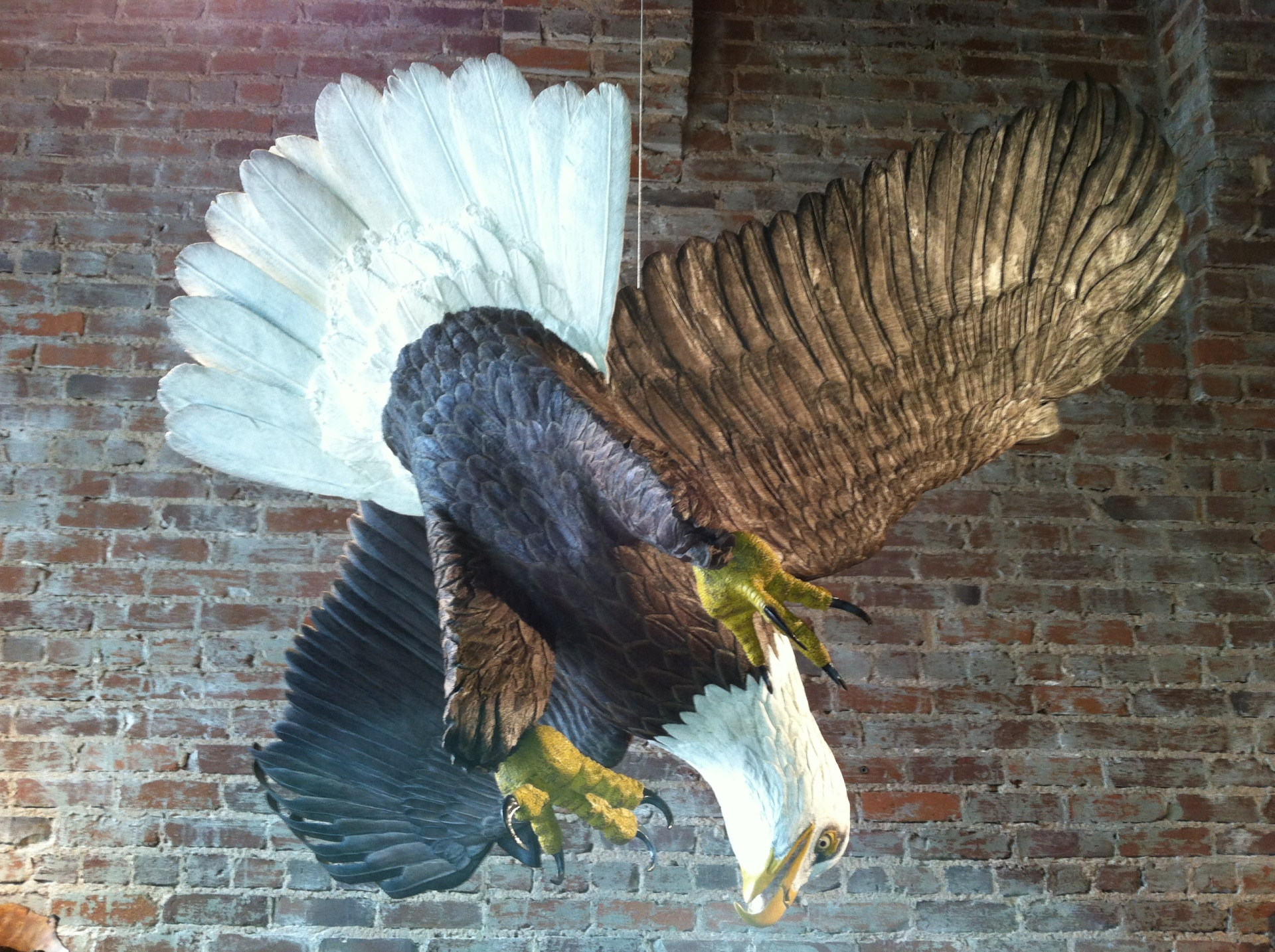 Full size hand carved wood Bald Eagle
